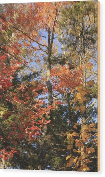 New England Trees Wood Print
