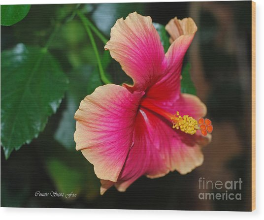 New Every Morning - Hibiscus Wood Print