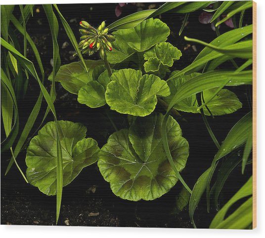 New Growth Wood Print by David Marr