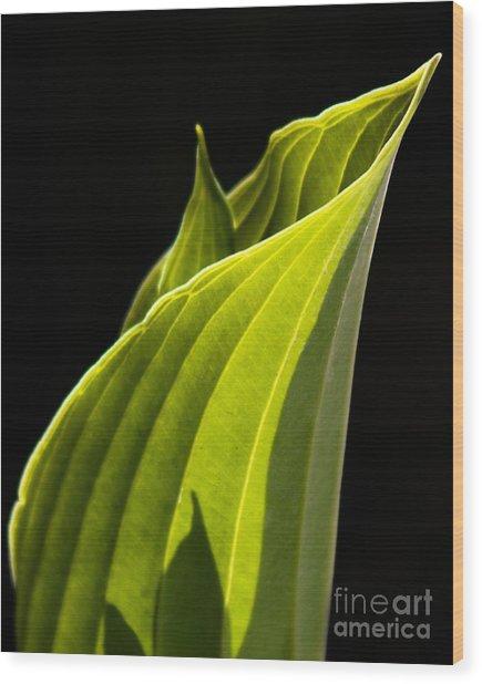 New Hosta Wood Print
