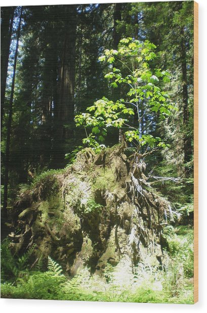 New Life For Old Stump Wood Print