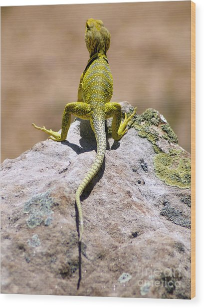 New Photographic Art Print For Sale Lizard Back Ghost Ranch New Mexico Wood Print