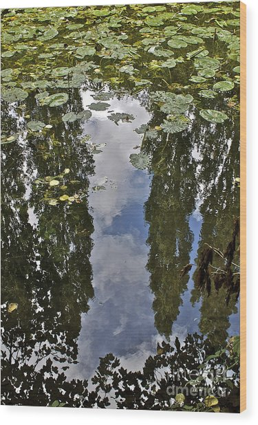 Reflections Amongst The Lily Pads Wood Print