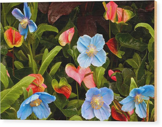 New World And Old World Exotic Flowers Wood Print