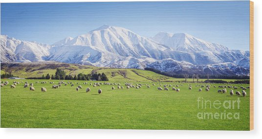 New Zealand Farmland Panorama Wood Print