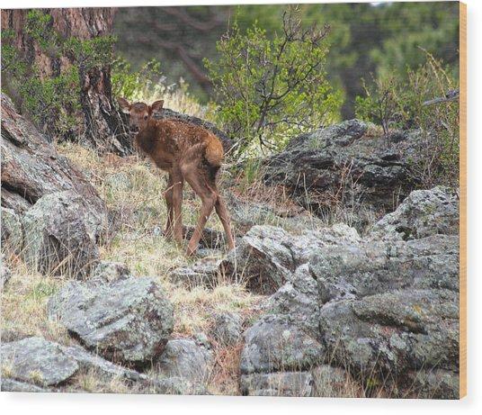 Newborn Elk Calf Wood Print