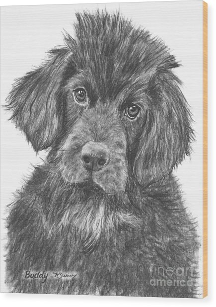 Newfoundland Puppy Sketch Wood Print
