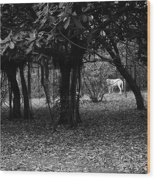 Nicaragua-fineart-23 Wood Print by Javier Ferrando