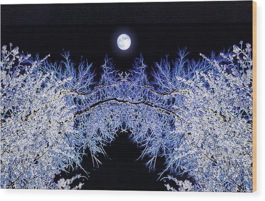 Night Blooms Wood Print