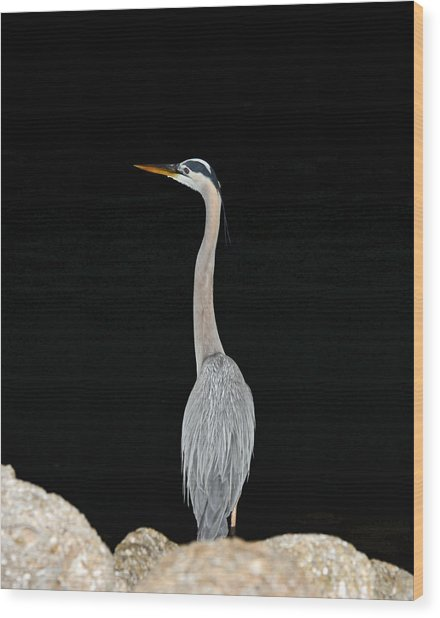 Night Of The Blue Heron 3 Wood Print