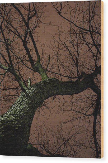 Night Tree Wood Print by Michel Mata