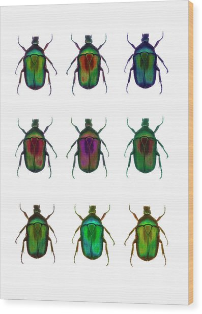 Nine Beetles Against A White Background Wood Print by Richard Boll