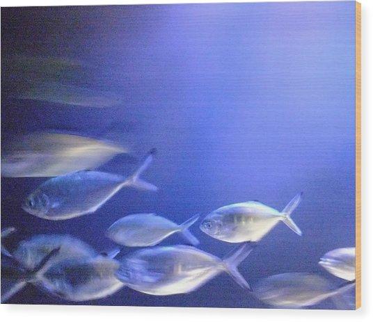 Nine Fishes Swimming Wood Print