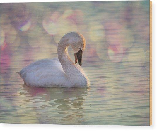 Shy Swan Wood Print