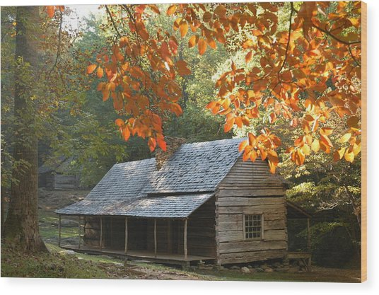 Noah Bud Ogle Farm Autumn Sunshine Wood Print by John Saunders