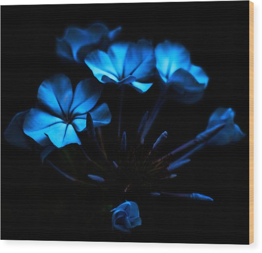 Nocturnal Blue Wood Print