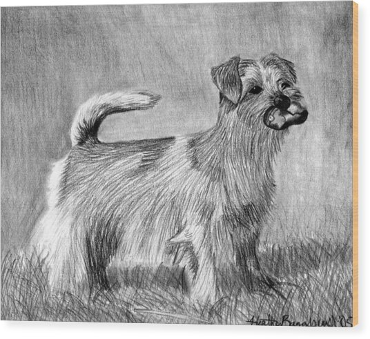 Norfolk Terrier Dog Portrait Wood Print by Olde Time  Mercantile