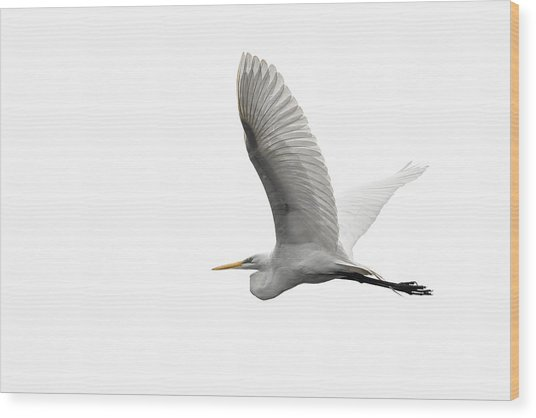 North American Great Egret Wood Print