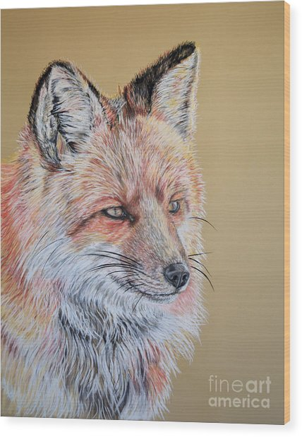 North American Red Fox Wood Print by Ann Marie Chaffin