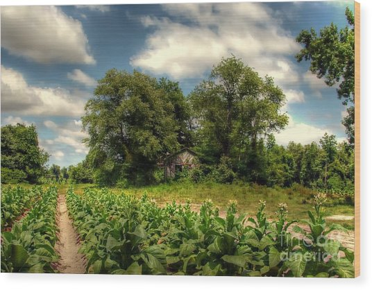 North Carolina Tobacco Farm Wood Print