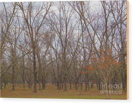 North Florida Orchard In Fall Wood Print