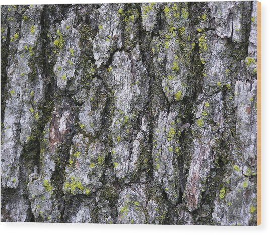 North-side Oak Bark Wood Print