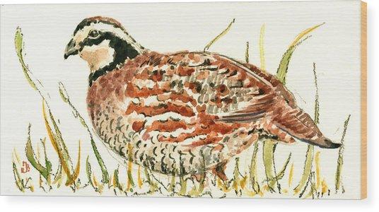 Northern Bobwhite Wood Print