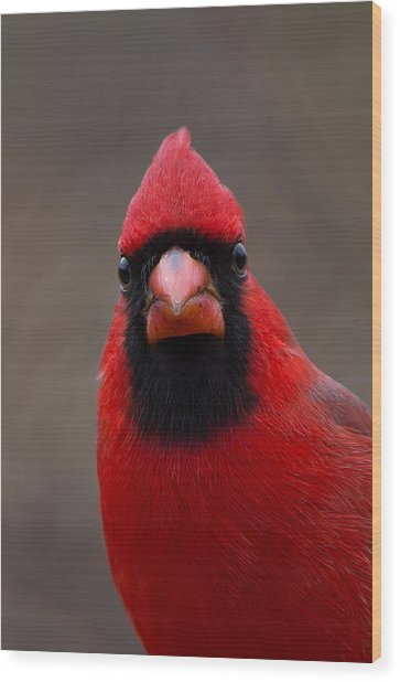 Northern Cardinal - 6393 Wood Print