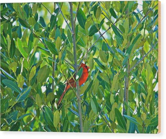 Northern Cardinal Hiding Among Green Leaves Wood Print