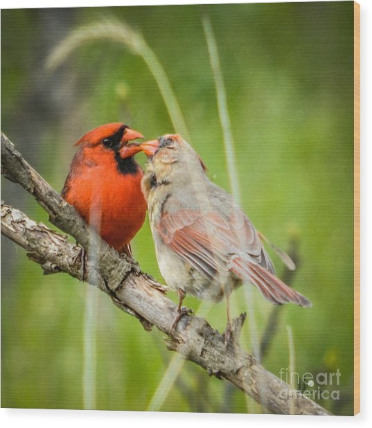 Northern Cardinal Male And Female Wood Print