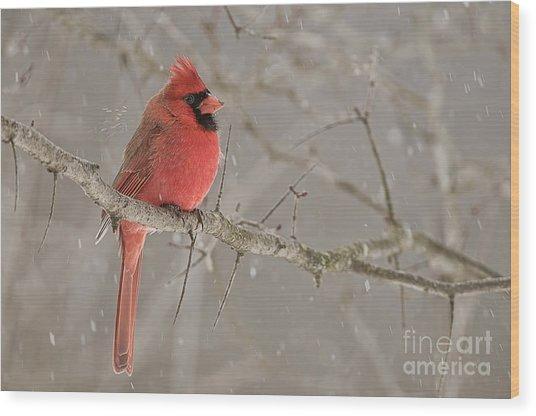 Northern Cardinal Wood Print