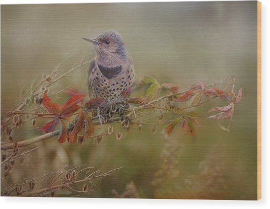 Northern Flicker In Fall Colors Wood Print