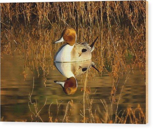 Northern Pintail Duck Wood Print by Thomas Kaestner
