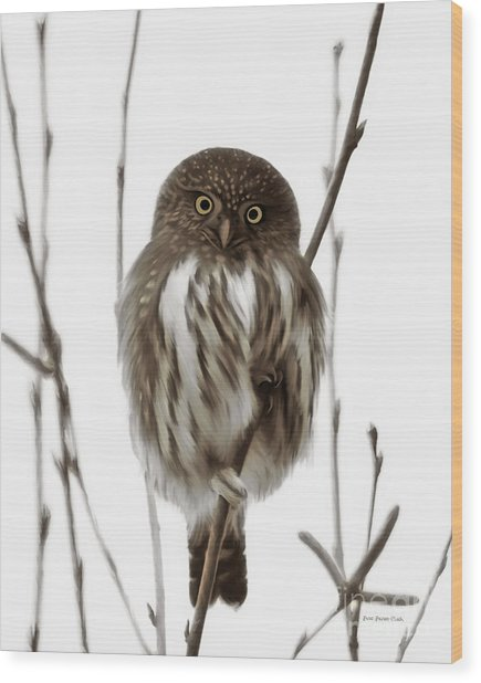 Northern Pygmy Owl - Little One Wood Print