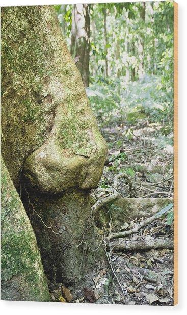 Nose Tree In Gwandanaland Wood Print by Debbie Cundy
