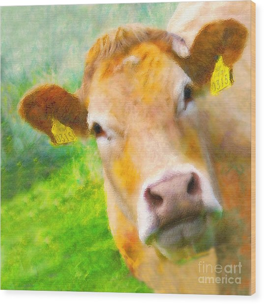 Nosey Cow Wood Print by Jo Collins