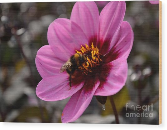 Nosy Bumble Bee Wood Print