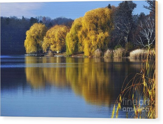 Autumn Weeping Willows Wood Print