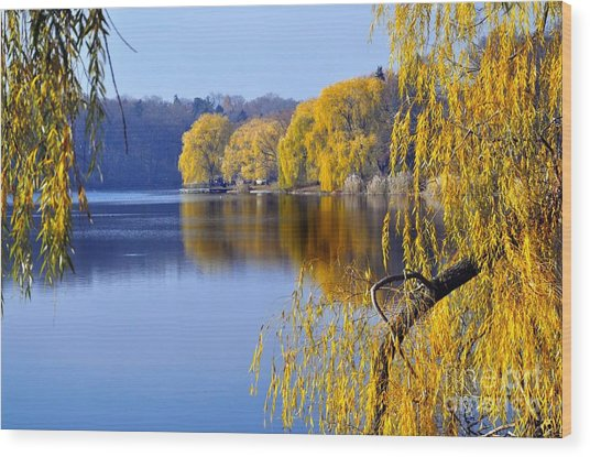 November Weeping Willows Wood Print
