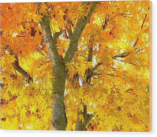 Novemberness Wood Print