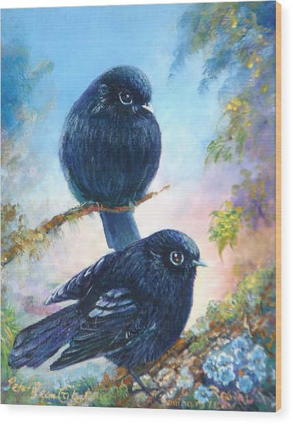 Nz Black Robins Wood Print by Peter Jean Caley