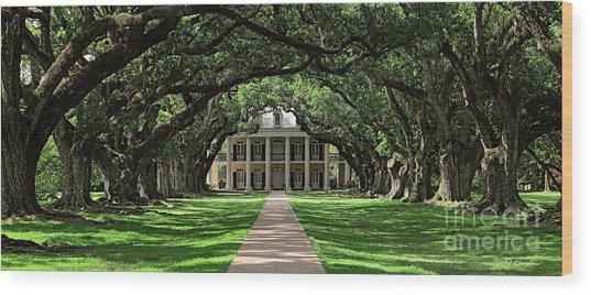 Oak Alley Wood Print
