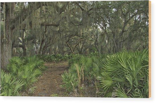 Oak Hammock. Split Oak Forest. Wood Print