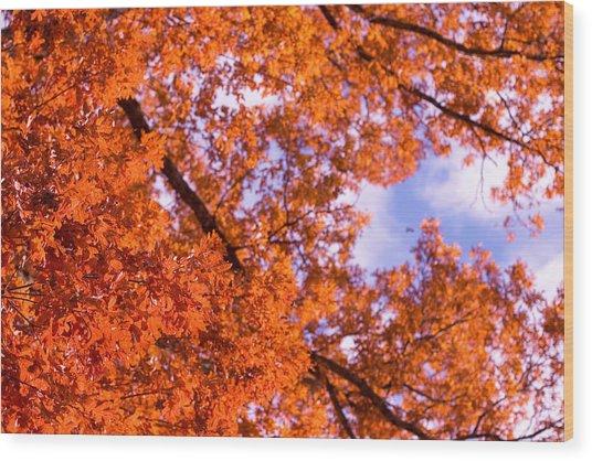 Oak In Evening Sun Wood Print by Denise Beverly