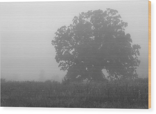 Oak In The Fog Wood Print