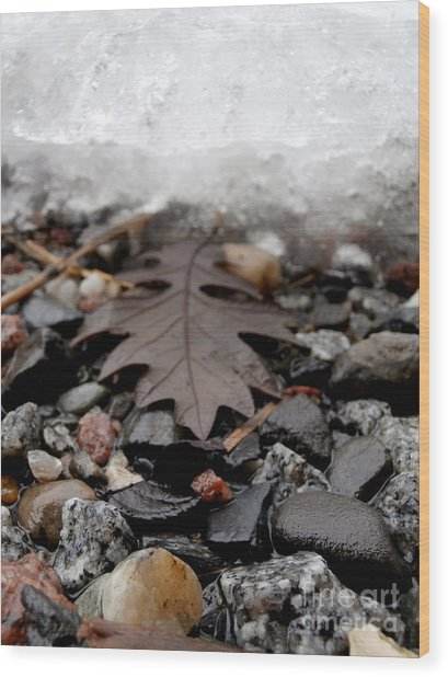 Oak Leaf On A Winter's Day Wood Print by Steven Valkenberg