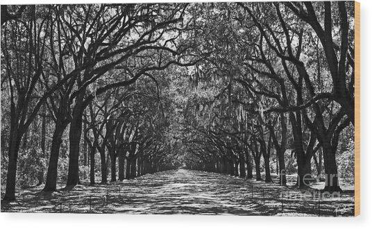 Oak Lined Lane Wood Print