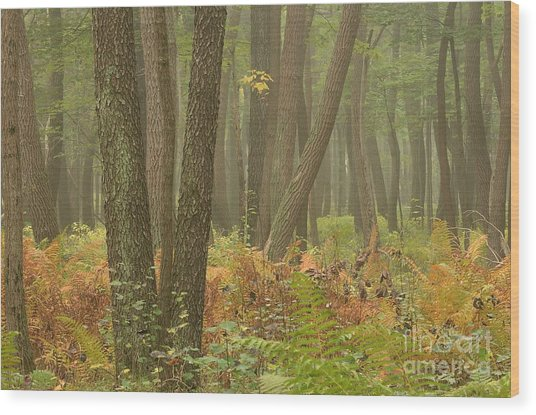 Oak Openings Fog Forest Wood Print
