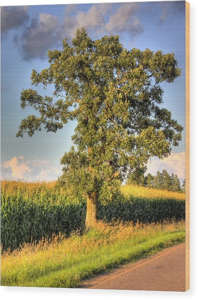 Oak Tree By The Roadside Wood Print