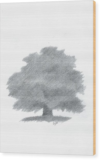 Oak Tree Drawing Number Five Wood Print by Alan Daysh